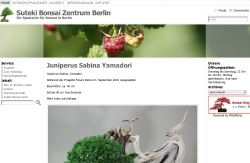 Suteki Bonsai Zentrum Berlin